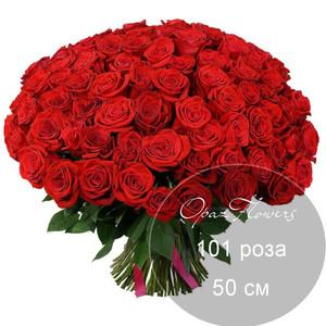 101 красная роза 50 см под ленту