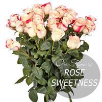 """Букет из 25 роз """"Свитнесс"""" 50 см"""