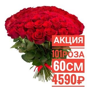 101 красная роза 60 см крупный бутон. По Вашему желанию цвет может быть изменён.