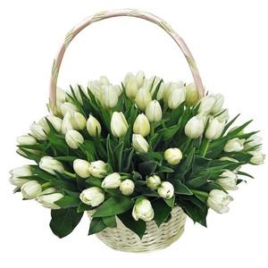 Тюльпаны 55шт №ТУ50