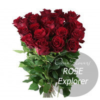 """Букет 51 роза """"Эксплорер"""" 90 см"""