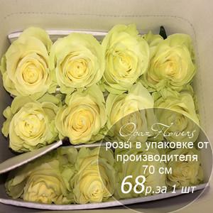 Розы в пачке от производителя   высота 70 см  ар.RO-016