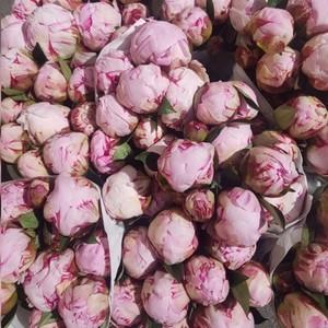 Пионы розовые № 001