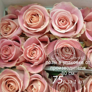 Розы в пачке от производителя   высота 80 см  ар.RO-023