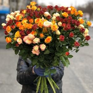 Букет 15 кустовых роз в оформлении  № АН-014
