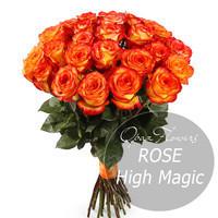 Букет из 25 роз Хай Меджик 60 см