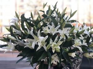 Букет из 25 белых лилий