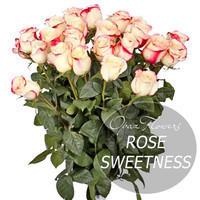 """Букет из 25 роз """"Свитнесс"""" 60 см"""
