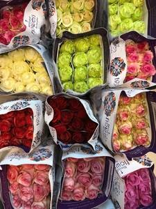 Роза Эквадор микс 60 см. заказ от 25 шт.