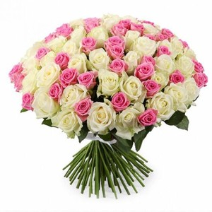 101 бело-розовая роза 80см Акция
