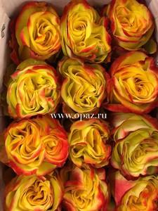 "Роза ""Хай Елоу"" 50 см в упаковке от производителя"