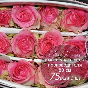 Розы в пачке от производителя   высота 80 см  ар.RO-020
