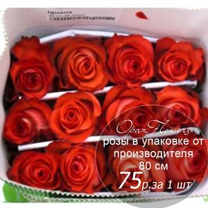 Розы в пачке от производителя   высота 80 см  ар.RO-022