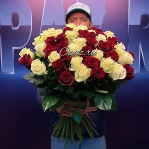 51 роза Эквадор Premium 60см №РС-092