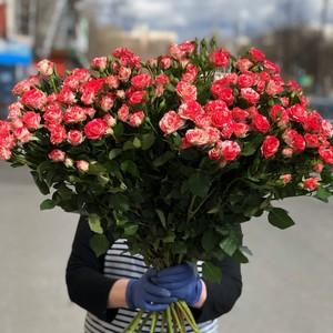 Роза кустовая 15шт