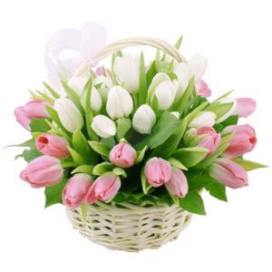 Тюльпаны розовые и белые 35 шт. в корзине