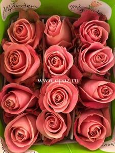 """Роза """"Хермоза"""" 50см цена за шт. 63руб. в упак 25шт. от производителя"""