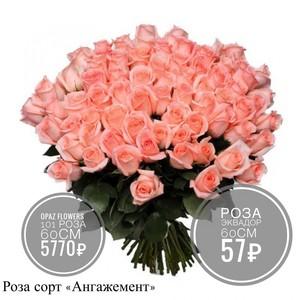 101 розовая роза 60 см