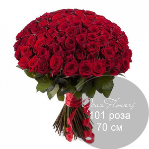 101 красная роза 70 см под ленту