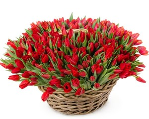 Тюльпаны 151шт. № ТУ001