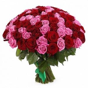 101 красно-розовая роза 60см Акция