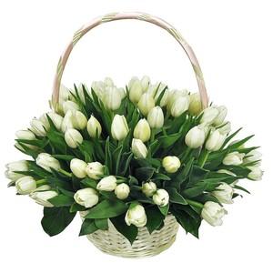 Тюльпаны белые 75 шт. в корзине