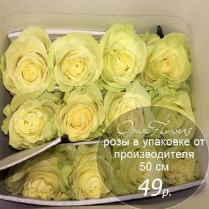 Розы в пачке от производителя   высота 50 см  ар.RO-003