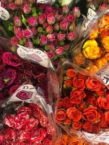 Роза кустовая микс 70 см. заказ от 10 шт.