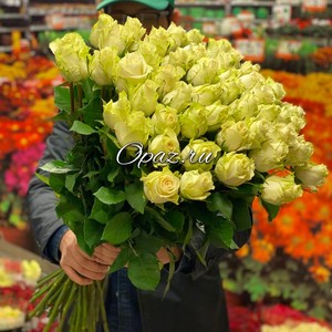 51 роза Голландия Premium 70см №РС-104