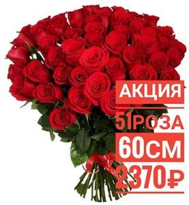 51 красная роза Эквадор 60 см крупный бутон. По Вашему желанию цвет может быть изменён. 51 красная роза Эквадор 60 см крупный бутон. По Вашему желанию цвет может быть изменён.