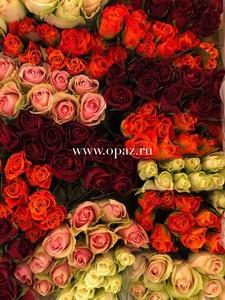 Роза Кения 40 см в упаковке от производителя