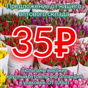 Тюльпаны от 100шт