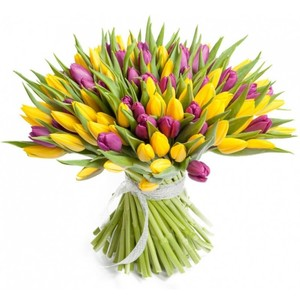 Тюльпаны 75 шт № ТУ007