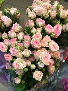 Роза крем твистер 1 шт 55р 70 см. В пачке от производителя 10 шт