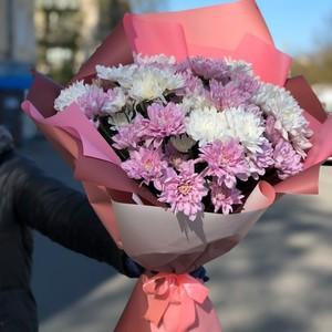 Букет 11 бело-розовые хризантемы  в оформлении № ВС 005