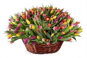 Тюльпаны микс 151 шт. в корзине