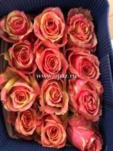 """Роза """"Фиеста"""" 80см цена за шт. 88руб. в упак 25шт. от производителя"""