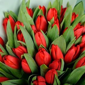 Тюльпаны Уп-ка 50шт №ТУ56