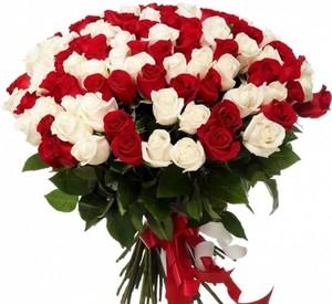 101 бело-красная роза 60 см Акция