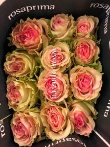 """Роза """"Эсперанса"""" 80 см в упаковке от производителя"""