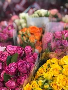 Роза кустовая микс 50 см. заказ от 10 шт.