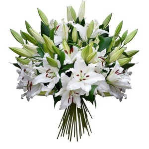 Лилия метровая белая 1 шт
