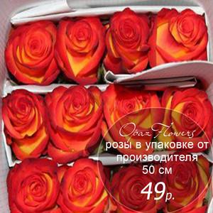 Розы в пачке от производителя   высота 50 см  ар.RO-004