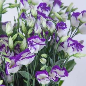 Эустома бело-фиолетовая 1шт