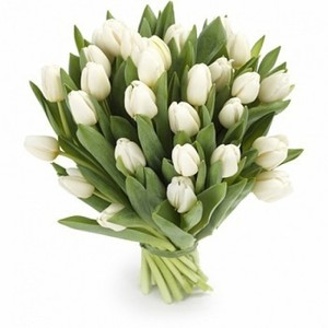 Тюльпаны 25шт №ТУ33