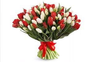 Букет красные и белые тюльпаны 75 шт. в оформлении лента