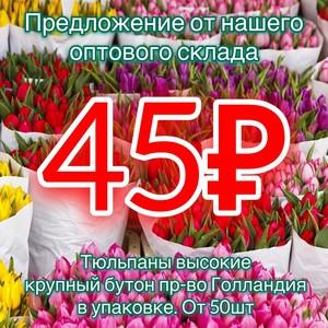 Тюльпаны от 50шт