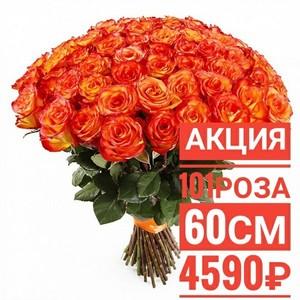 """101 роза """"Хай Меджик"""" 60 см крупный бутон. По Вашему желанию цвет может быть изменён."""