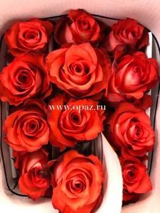 """Роза """"Игуана"""" 50см цена за шт. 63руб. в упак 25шт. от производителя"""