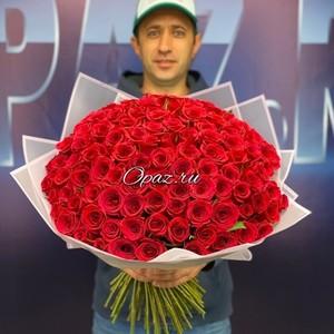101 роза Голландия Premium в оформлении №РС-105 Роза 50см